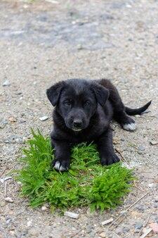 ホームレスの子犬が緑の草の小さな島を守っています。エコロジー、気候変動、地球温暖化、持続可能な開発、未来の世代のための地球の保全の概念。親切な子犬。