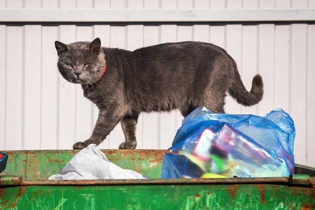 ゴミ箱にホームレスの悲しい猫