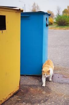 雨の曇りの日にゴミ箱の近くにホームレスの悲しい赤毛の猫