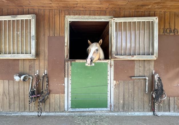 馬術学校の馬小屋にいる馬