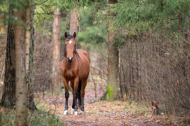 Лошадь гуляет по лесу