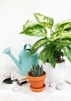 화분에 있는 집 식물과 탁자에 있는 녹색 물뿌리개