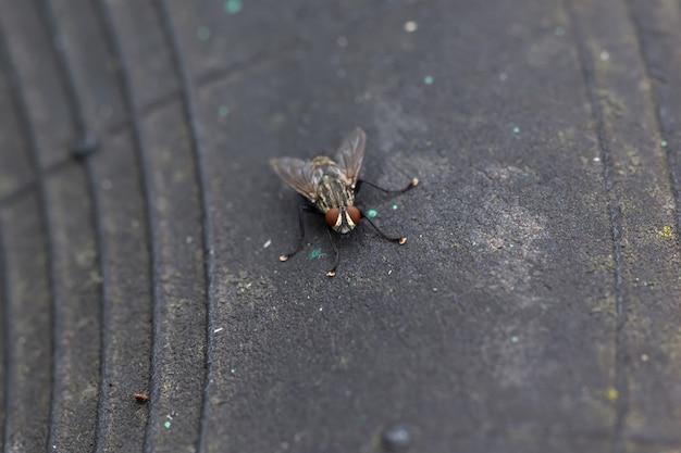집파리가 트랙터의 오래된 고무 타이어에 앉아 있다