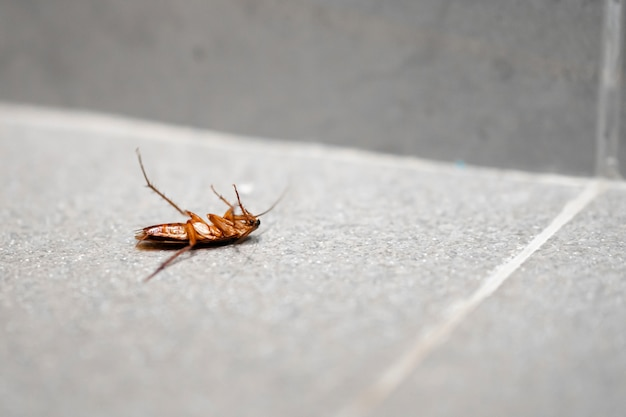 Огромный таракан на полу.