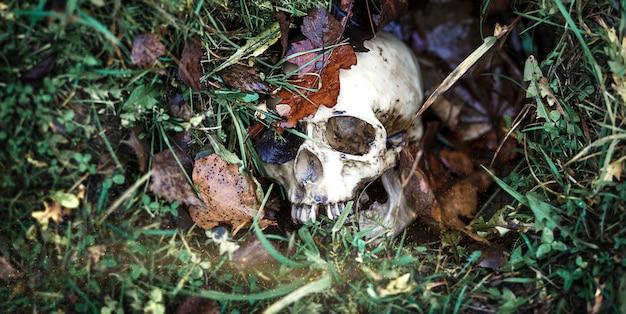 草の中の人間の頭蓋骨は紅葉の下に埋もれています。偽の頭蓋骨のクローズアップ-自然な背景で。ハロウィーンのための人間の頭蓋骨のコピー、ホラー、死、病気、戦争の神秘的な概念。