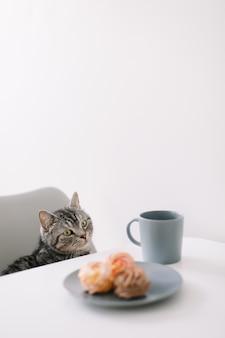 Голодный домашний кот сидит за столиком с завтраком