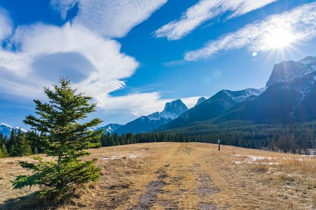 Изолированная сосна на пастбищах нерастаявшего снега с красивым облаком в поздний осенний солнечный день.
