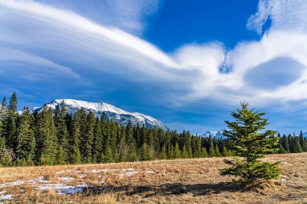 늦은 가을에 아름다운 cloudscape와 녹지 않은 눈 초원에 고립 된 소나무
