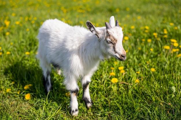春に咲く草原で子供が一人で立っています