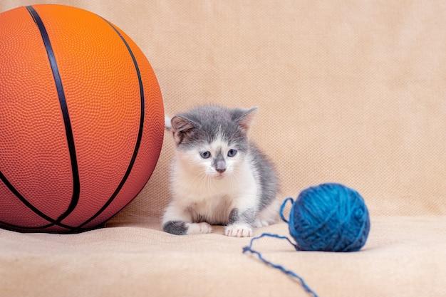 새끼 고양이는 농구 근처에서 실의 공을 가지고 노는