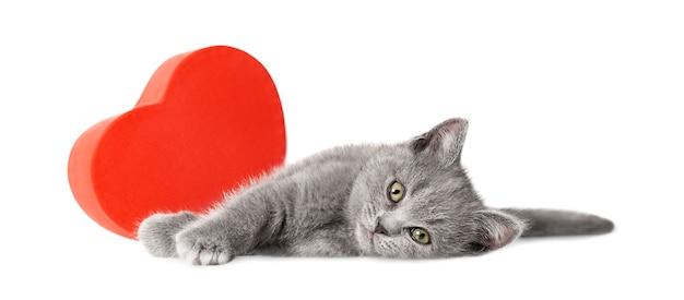 Котенок с подарочной коробкой в форме сердца лежит на белом фоне