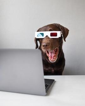 ピンクまたはグレーの背景のステレオメガネにdメガネをかけたラブラドールレトリバー犬