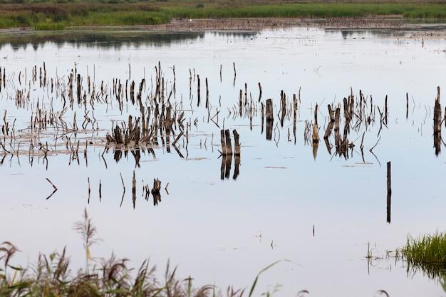Озеро с разными растениями и стволами деревьев летом, озеро в пасмурную погоду