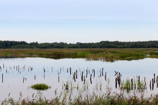 Озеро с разными растениями