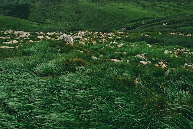 잔디와 돌로 덮인 산악 지역의 풍경.