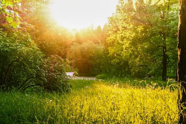 녹지와 태양이있는 풍경