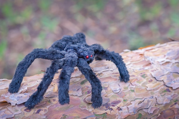 赤い目をした大きな黒いふわふわのクモが木の幹に座っています。