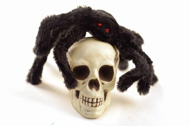 큰 검은 거미는 발에 인간의 두개골을 보유하고 있습니다.