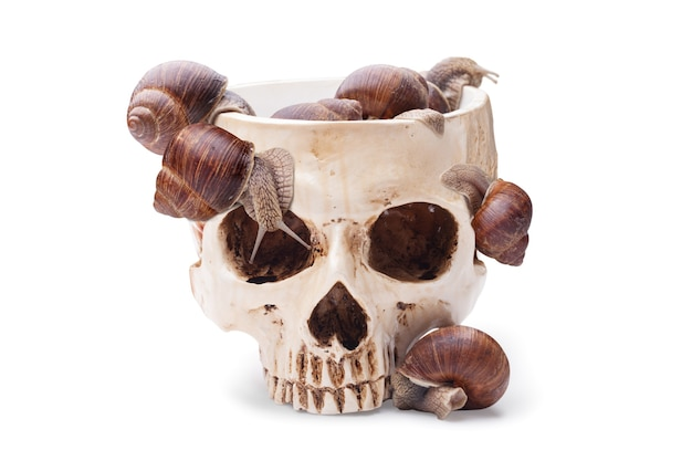 Большая чаша человеческого черепа, наполненная улитками. коктейль на хэллоуин
