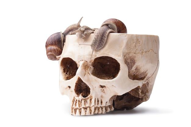 カタツムリで満たされた人間の頭蓋骨の大きなボウル。ハロウィンカクテル