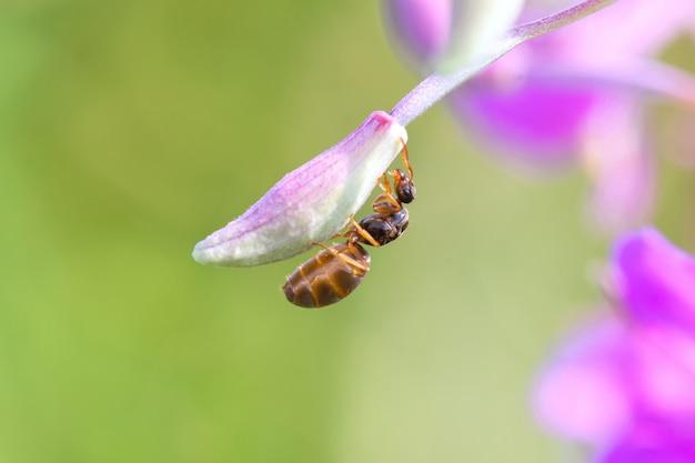 Большой коричневый муравей держится лапами за маленький цветок