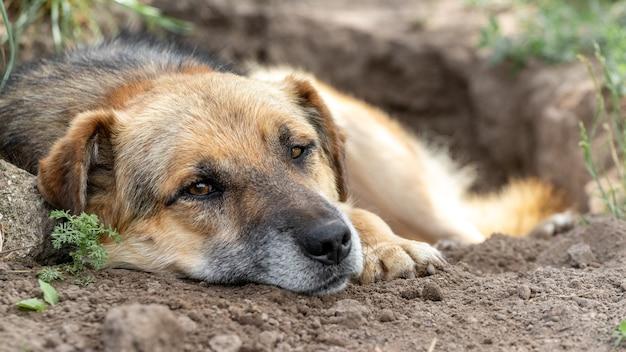 大きな茶色の犬が掘られた穴に横たわっています