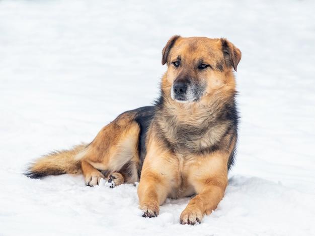 큰 갈색 개가 겨울에 눈 속에 누워 있다