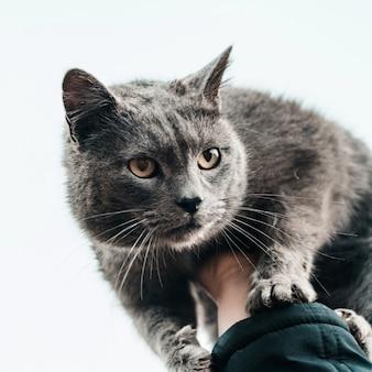 Во дворе играет большой серый кот с короткой шерстью.