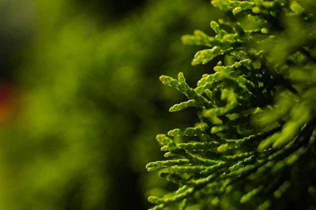 큰 녹색 덤불이 정원에서 자랍니다. 작은 나뭇 가지에 초점을 맞춘 그림
