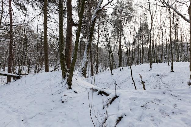 Большое количество голых лиственных деревьев в зимнее время года, деревья покрыты снегом после заморозков и снегопадов, в парке или зимнем лесу сугробы, на снегу останутся следы.