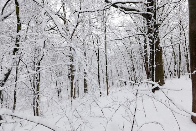 冬季には多くの裸の落葉樹があり、霜や降雪の後、木は雪で覆われ、公園や冬の森の雪の吹きだまり、雪の中に足跡があります Premium写真