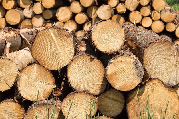 一年生の輪が付いた多数の丸い木の幹は、伐採中に折りたたまれ、森の中でクローズアップされます