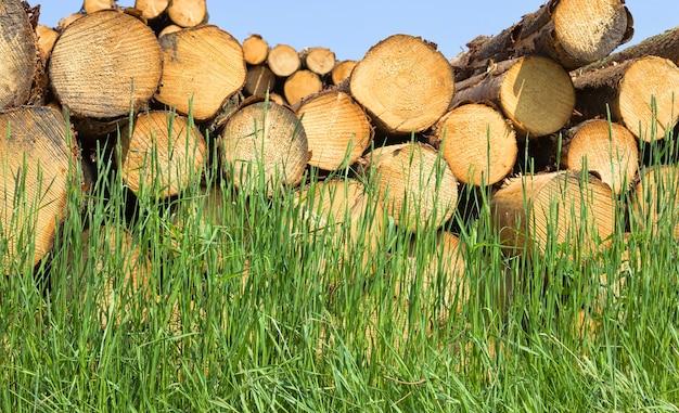 一年生の輪が付いた多数の丸い木の幹は、伐採中に折りたたまれます