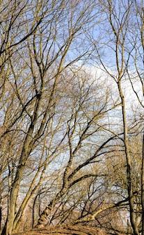 倒れた後、葉のない多数の木の枝