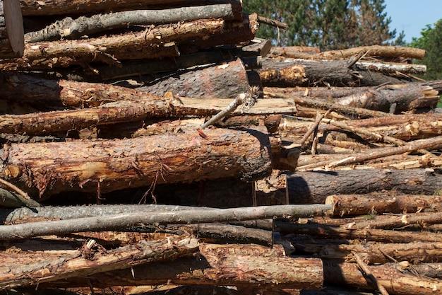 木のために伐採された松の木の老いも若きも多数の幹、クローズアップ