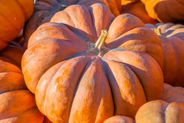 Большая оранжевая тыква крупным планом в окружении других тыкв фото высокого качества