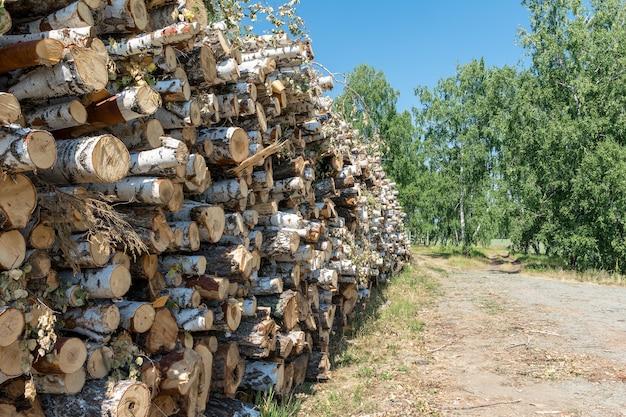 Большая куча срубленных деревьев лежит на опушке леса