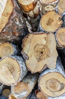 Большая куча срубленных деревьев лежит на земле возле леса