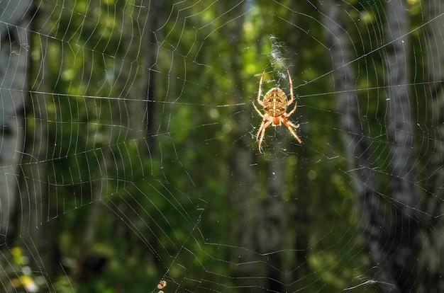 森の中の光る網の上に模様のある大きなクモ。ハロウィーンの表面、インターネット上のウイルス
