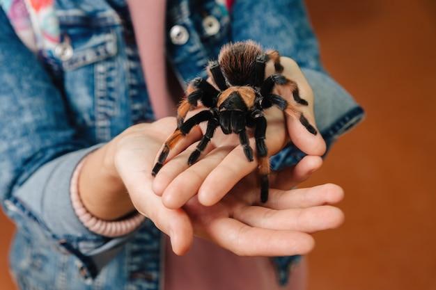 大きなタランチュラのクモが腕に座っています。