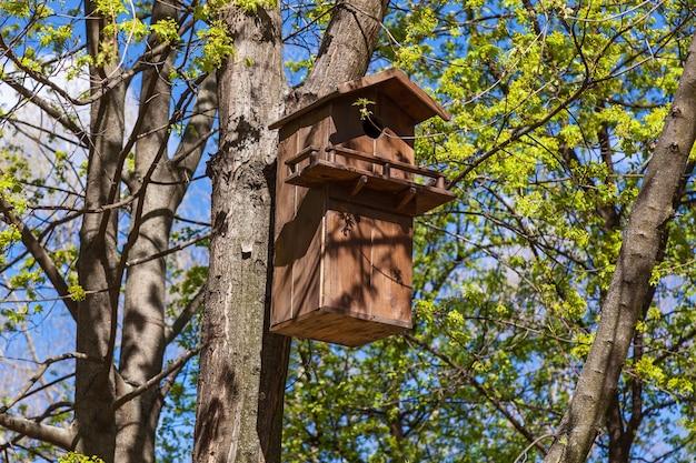 Большой деревянный скворечник на дереве весной.