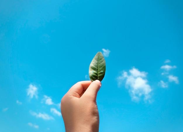 하늘의 잎