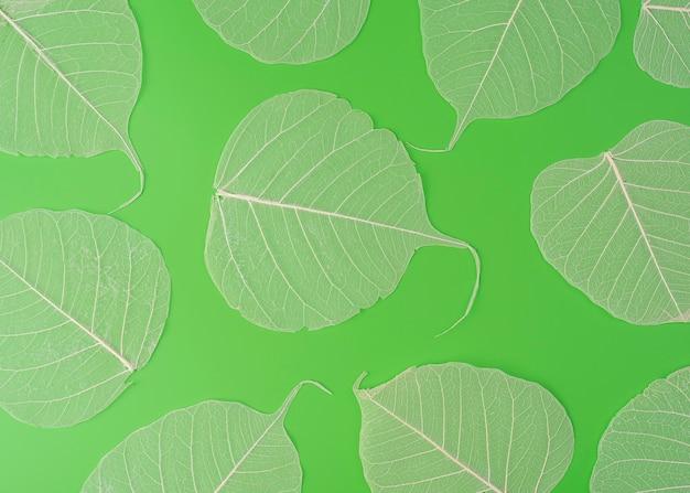 葉のスケルトンテクスチャは、高解像度で緑の背景のマクロビューに分離されてクローズアップ