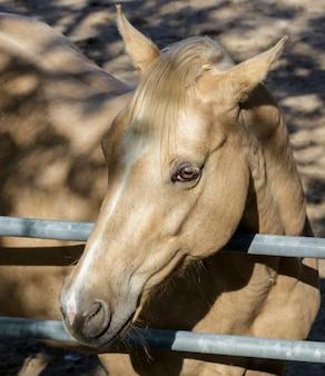 田舎の牧場にいる薄茶色の馬