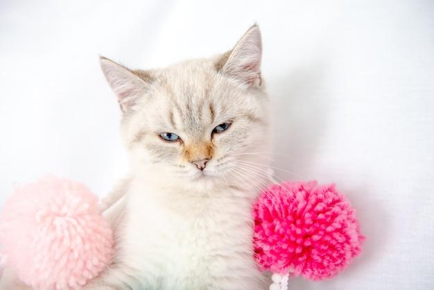 밝은 회색 고양이는 흰색 시트에 침대에 누워 엉킴을 가지고 노는다