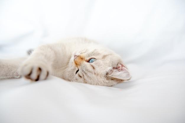Светло-серый кот лежит на кровати на белой простыне