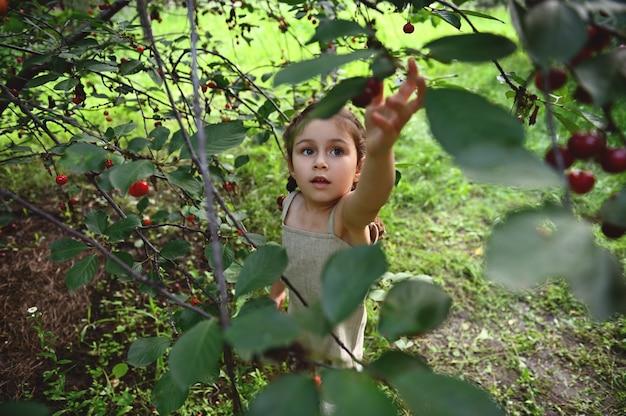 庭でさくらんぼを拾うために手を引き上げる愛らしい少女。夏の日にさくらんぼを収穫する