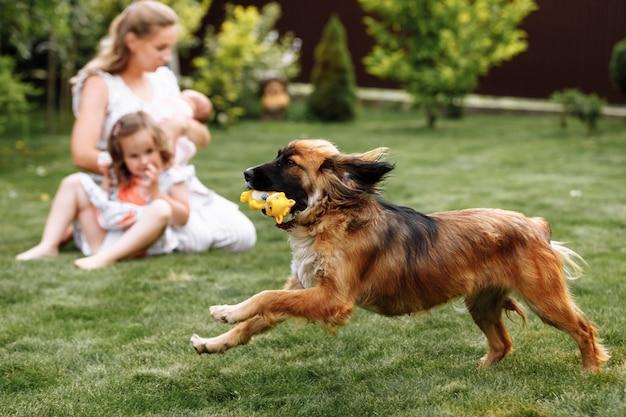 Маленькая белокурая девочка со своей собакой на улице в парке