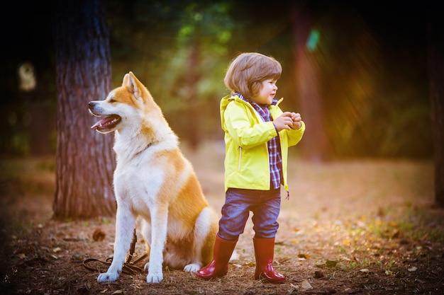 秋の公園で赤い犬秋田犬と赤いゴム長靴の小さな男の子