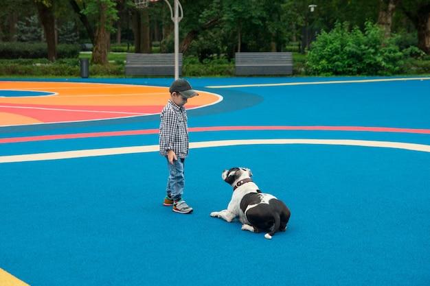 小さな男の子が犬の飼育に従事しています。動物の訓練と遊び。
